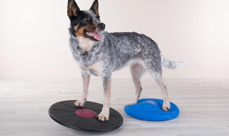 Pfotenimpuls mobile hundephysiotherapie und praxis altdorf b blingen stuttgart sindelfingen - Boblingen mobel ...